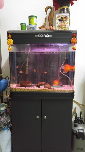 dubizzle dubai aquariums fish reptile supplies 90 liter fish aquarium for sale 60cms l. Black Bedroom Furniture Sets. Home Design Ideas