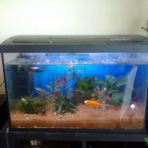 Dubizzle dubai aquariums fish reptile supplies for Aquarium decoration ideas freshwater