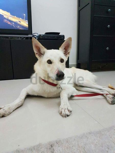 Free Adoption Dogs In Dubai