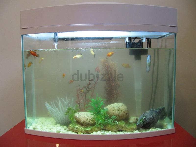 Dubizzle dubai aquariums fish reptile supplies small for Small fish tanks for sale